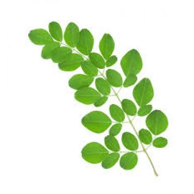Moringa Leaf Powder - 50gms
