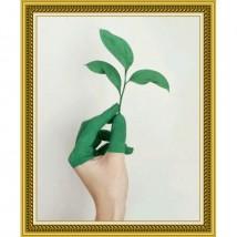 Beautiful Wall Frame Wall Art in Green Colour